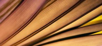 Färgrika ljus och abstrakta former bladet arkivbild