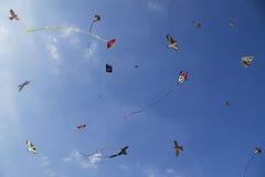 Färgrika ljusa drakar i himlen Royaltyfri Fotografi