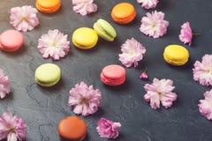 Färgrika makron med våren sakura blommar på svart backround Royaltyfri Bild