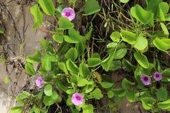 Färgrika makroskott av blommor på den Seychellerna ön fotografering för bildbyråer
