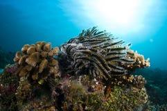 färgrika maldives revar seastar Fotografering för Bildbyråer