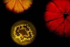Färgrika markerade frukter på svart bakgrund Arkivbild