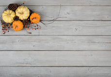Färgrika Mini Pumpkin, nedgångstilleben på lantliga Gray Wood Board Background med rum eller utrymme för kopian, text, dina ord Arkivfoton