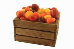 Färgrika mini- tomater Fotografering för Bildbyråer