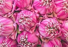 Färgrika modeller av lotusblomma Fotografering för Bildbyråer