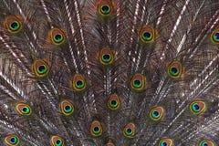 Färgrika modeller av tusentals härliga fåglar royaltyfria bilder