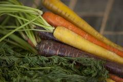 färgrika morötter Arkivbild
