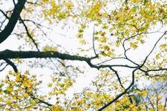 Färgrika nedgångsidor på en trädfilial mot bakgrund field blåa oklarheter för grön vitt wispy natursky för gräs royaltyfri bild
