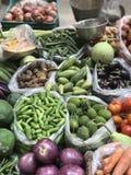 färgrika nya grönsaker Arkivbilder