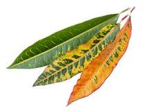 färgrika nya leaves arkivbilder