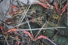 Färgrika nya levande hummer i en vattenhandfat  Arkivbilder