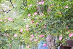 Färgrika nya parkerar blommapinks blomma den många morgonträdgården färg för det färgrika fantastiska gröna landskapet för trädet arkivfoto