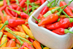 Färgrika nya peppar i den vita bunken Royaltyfri Foto
