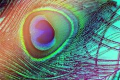 Färgrika och konstnärliga påfågelfjädrar Makrofoto av en ordning av lysande påfågelfjädrar arkivfoton
