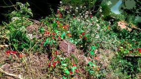 Färgrika ogräsbelastningar som ljusnar din dag royaltyfri foto