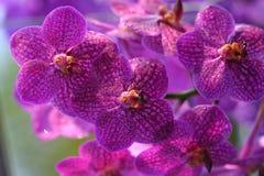 färgrika orchids Royaltyfri Foto