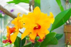 Färgrika orkidér för skönhet Arkivfoton