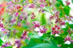 Färgrika orkidér för skönhet Arkivbilder
