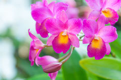 Färgrika orkidér för skönhet Royaltyfria Bilder