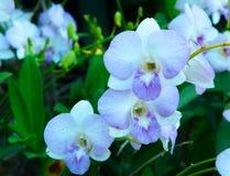 Färgrika orkidér för skönhet Royaltyfri Fotografi