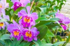 Färgrika orkidér för skönhet Arkivbild