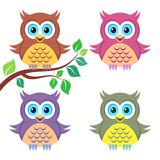 färgrika owls Arkivfoton