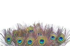 Färgrika påfågelfjädrar Royaltyfri Fotografi