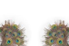 Färgrika påfågelfjädrar Royaltyfri Bild