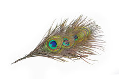 Färgrika påfågelfjädrar Arkivfoton