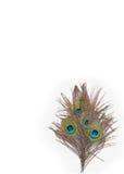 Färgrika påfågelfjädrar Royaltyfria Bilder