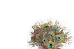 Färgrika påfågelfjädrar Arkivfoto