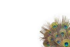 Färgrika påfågelfjädrar Arkivbild