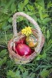Färgrika påskägg i en bakgrund för korg och för grönt gräs Royaltyfria Foton