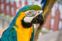 Färgrika papegojafåglar på den Samut Prakan krokodillantgården och zoo, Th Royaltyfri Fotografi