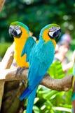 färgrika papegojor Royaltyfri Foto