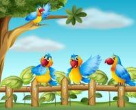 Färgrika papegojor på den fäktade trädgården Arkivbild
