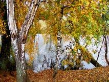 färgrika parktrees för höst Royaltyfria Foton