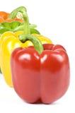 färgrika peppar för klocka Arkivfoto