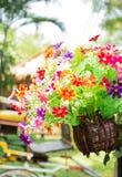 Färgrika plast- blommor i trävase arkivbilder