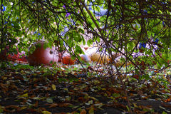 Färgrika pumpor hiden under buske arkivbild