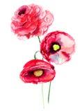 Färgrika röda blommor Royaltyfri Bild