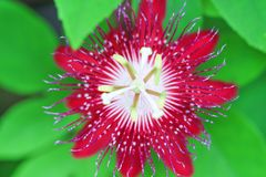 Färgrika röda exotiska blommor för bästa sikt som blommar i trädgårdbakgrund royaltyfria foton