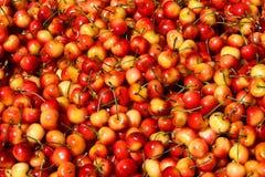 Färgrika röda och gula Rainier Cherries arkivfoton