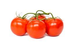 Färgrika röda och läckra tomater med vit bakgrund Royaltyfri Bild