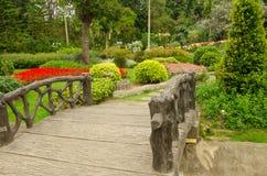 Färgrika rabatter i härligt parkerar i trädgårds- Thailand Royaltyfri Foto