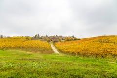 Färgrika rader av vingården, i att växa för vin i höst i Italien arkivfoton
