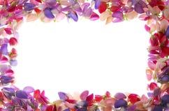 färgrika rampetals royaltyfri foto