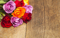 färgrika ro Fotografering för Bildbyråer
