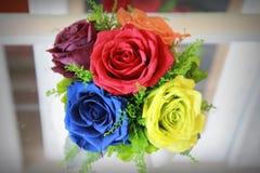 färgrika ro Royaltyfri Fotografi
