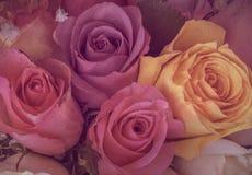 Färgrika rosor för tappning med dunkelt ljus royaltyfria foton